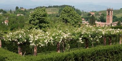 Cад стриженых кустов Виллы Массей в Италии
