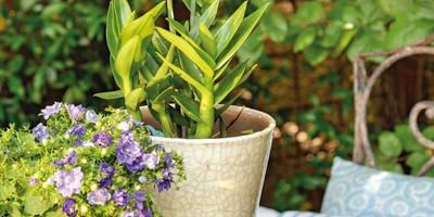 15 прекрасных идей для проведения волшебного вечера в саду