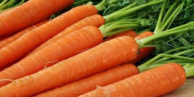5 шагов к высокому урожаю моркови