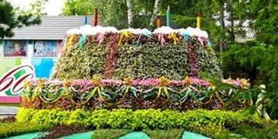 Необычные композиции  из цветов