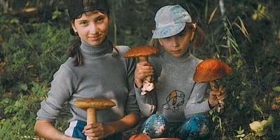 Ох уж эти грибы…
