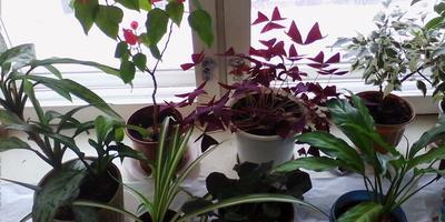 Мои домашние растения