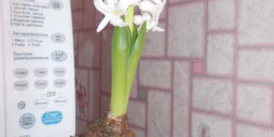 мои комнатные растения