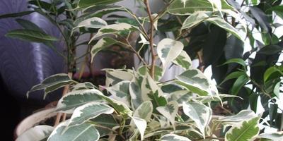 Мой небольшой зеленый рай