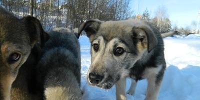 А Вы подкармливаете бездомных собак???