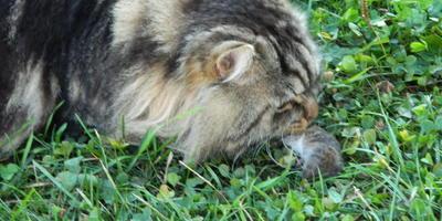 Кот и мыши...