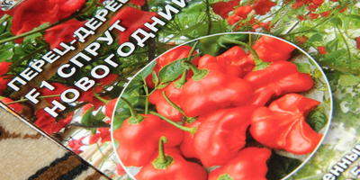 Новые сорта томатов