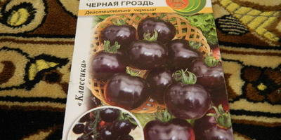 """Томат с названием """"Черная гроздь"""""""