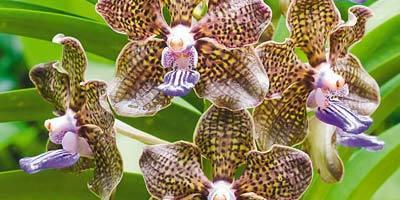 Орхидеи для начинающих: 8 простых советов