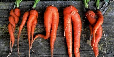 Морковные выкрутасы
