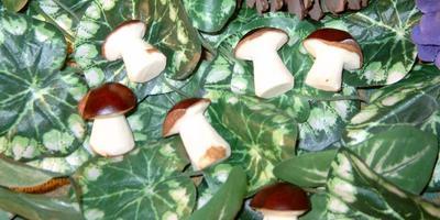Сходила по грибы в каштановую рощу