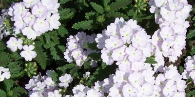 Какие из весенних цветов у вас самые любимые?