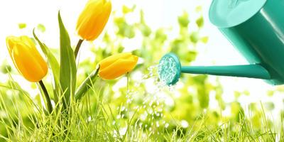 Поливать растения уриной (мочой) - это реально полезно или глупость?