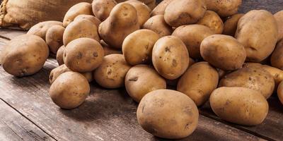 Каким уродился картофель у вас в этом году? И какие ошибки надо учесть на будущий год?