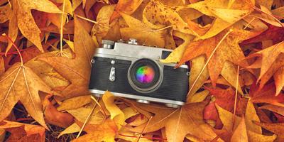 Стартовал XII этап конкурса дачных фотографий