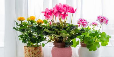"""В нашей группе в ВКонтакте - фотоконкурс """"Комнатные растения - это лето круглый год""""! Присоединяйтесь!"""