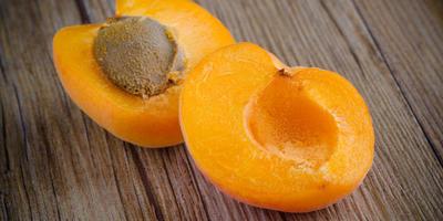 Можно ли из косточки абрикоса вырастить плодоносящее дерево?
