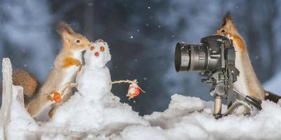 Стартовал XXIII этап конкурса дачных фотографий!