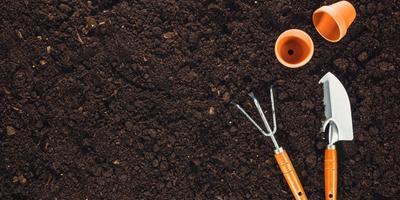Как вы обеззараживаете грунт для рассады?