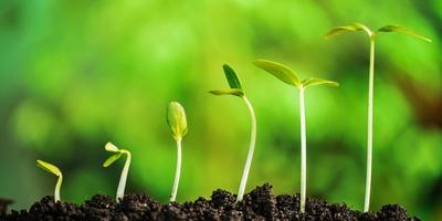 Объявление для группы тестирования семян Агрофирмы АЭЛИТА. Приступаем к освещению II этапа