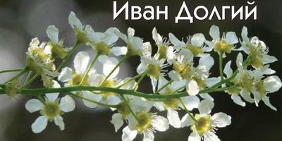Гидрометцентр 7 дач спрашивает - весна пришла уже ко всем? Прием!