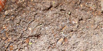 как выглядит рассада клубники из семян?