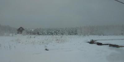 Как спасти растения, если выпал снег, стало холодно?
