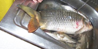 Дача + рыбалка = лето удалось!