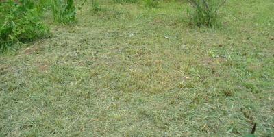 Как обработать заброшенную землю