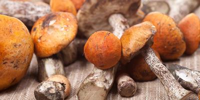 Как правильно сушить грибы