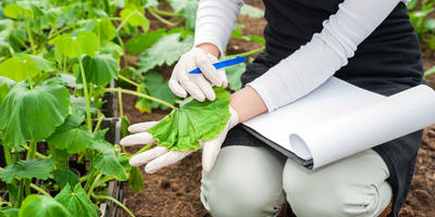 Почему компост вреден для растений