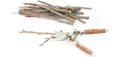 Как правильно заготовить черенки для привоя и сохранить их до весны