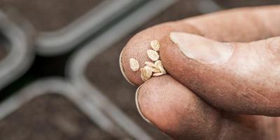 Как быстро, легко и эффективно подготовить семена к посеву