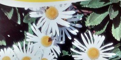 Помогите определить, что за цветок и где его можно приобрести?