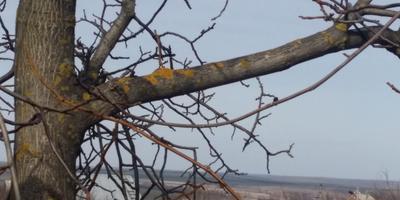 Что это на деревьях и как с этим бороться?