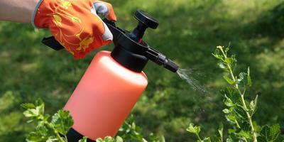 Какие бывают средства для защиты растений от болезней и вредителей
