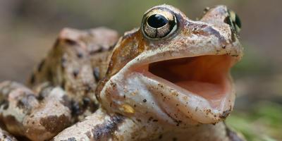 Зачем лягушке домик и как его построить