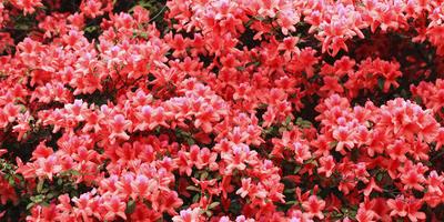 16 декоративных растений для кислых почв