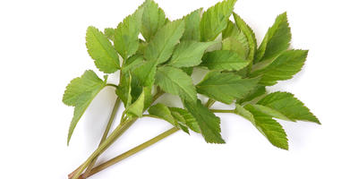 Весенние витамины к дачному столу и впрок