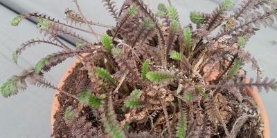 Подскажите, пожалуйста, что это за растения?