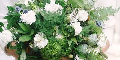 Подскажите, пожалуйста, что за цветок белый пушистый?