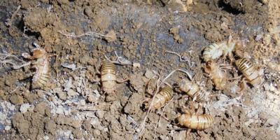 Подскажите, чьи это личинки: вредных или полезных насекомых?