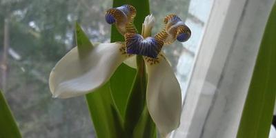Подскажите, пожалуйста, как называется цветок и как за ним ухаживать?