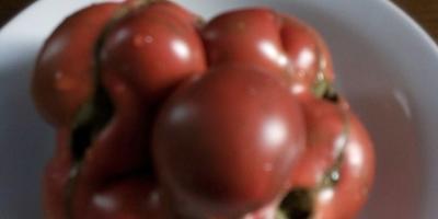Почему помидоры растут такими?