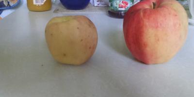 Помогите, пожалуйста, опознать сорт яблок