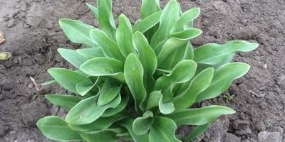 Что это за растение и что с ним сейчас делать?