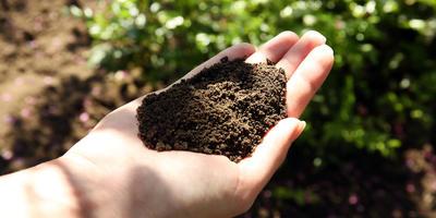 Как сделать черную землю на своих грядках