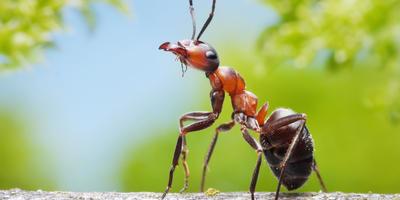 Лентяи и работяги муравейника