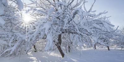 Барахтаться в снегу полезно для сада