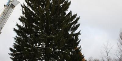 Честь спилить главную новогоднюю ель страны выпала компании Husqvarnа